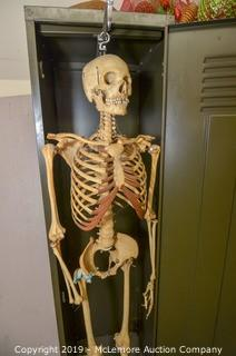 Clay-Adams Skeleton for Medical Profession